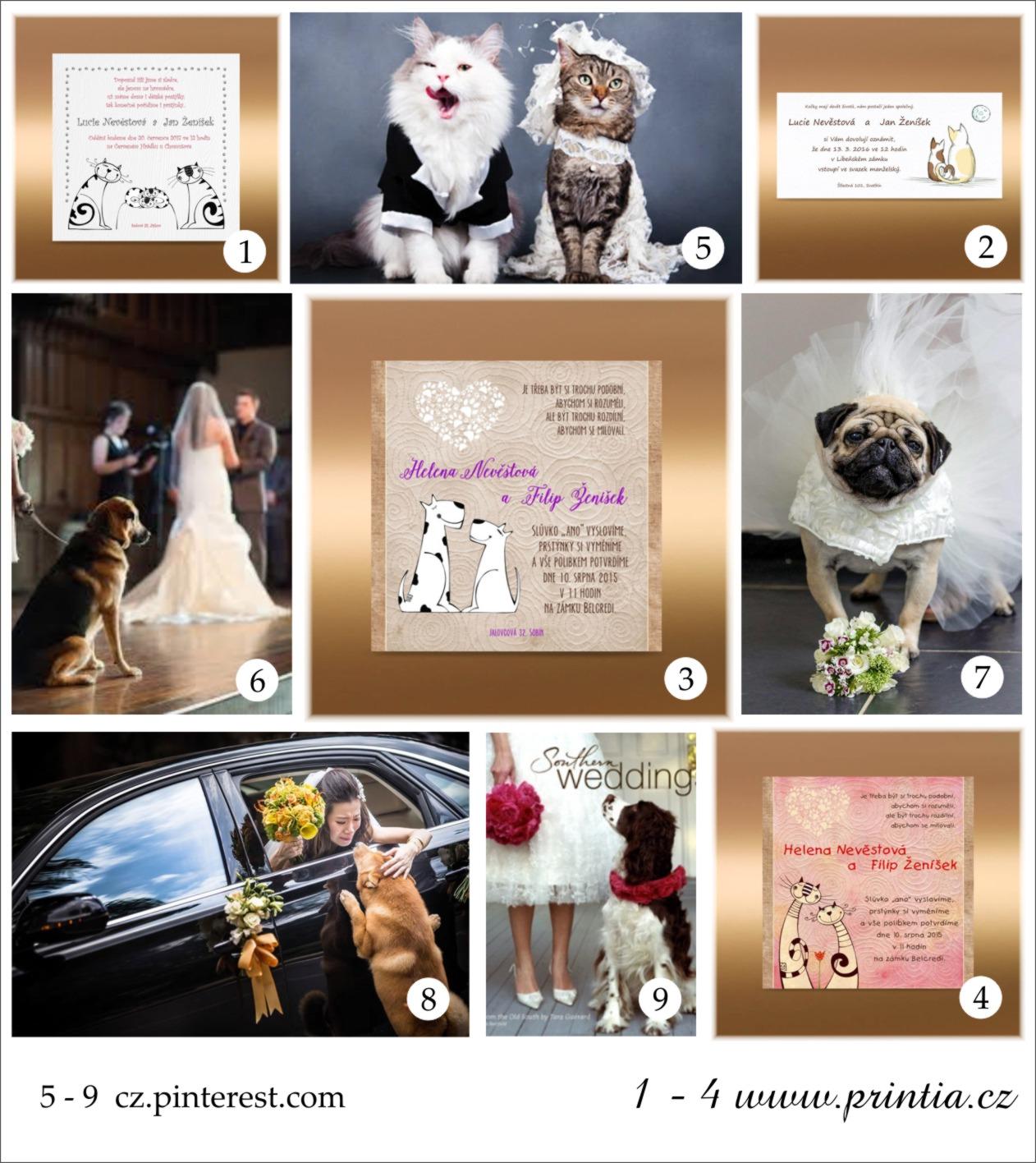 Domácí mazlíčci ajiná zvířátka na svatbě